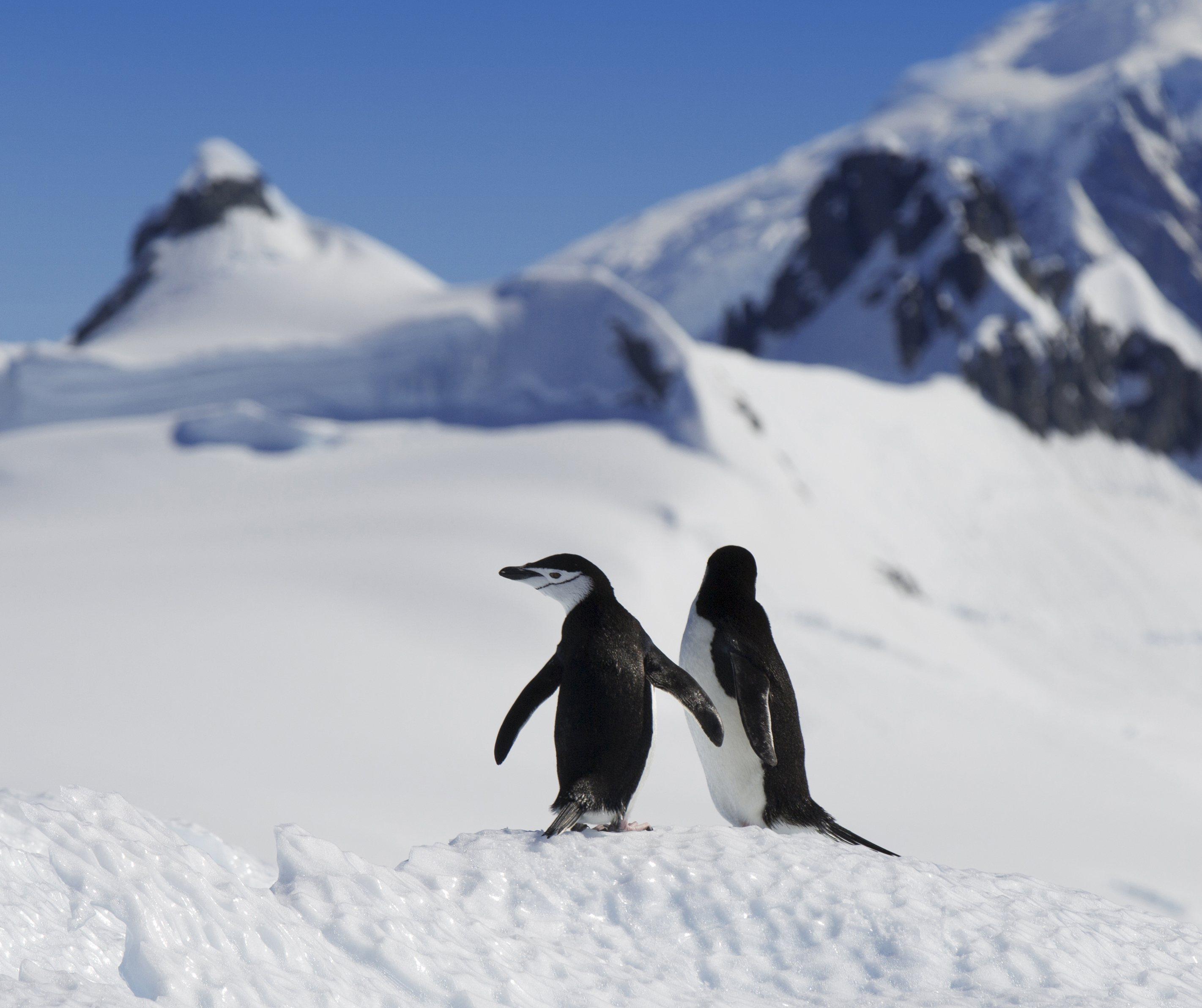 mates-penguins-antarctica-149-292