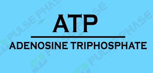 ATP Full form