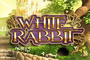 white rabbit btg