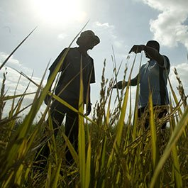 Farmers discussing crops in a field in Mozambique