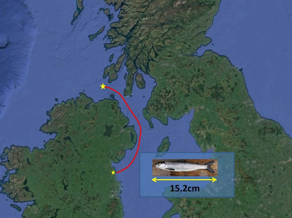 Go north, and swim fast! - COMPASS Project Blog Article