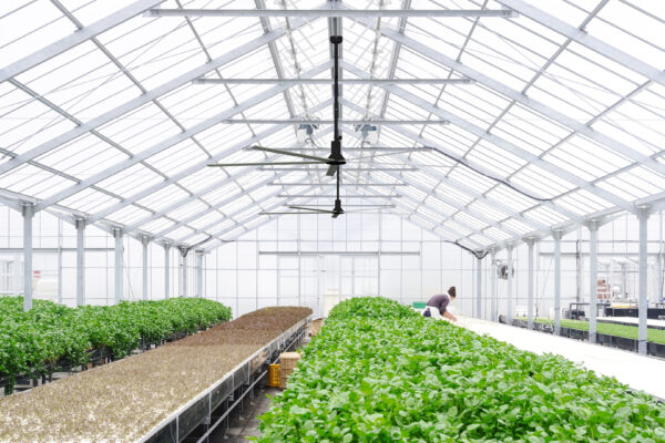 M600 Greenhouse integration sans flou_2160p