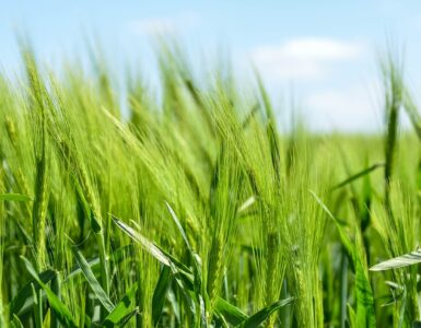 Vil legge tilrette for mer økologisk jordbruk.