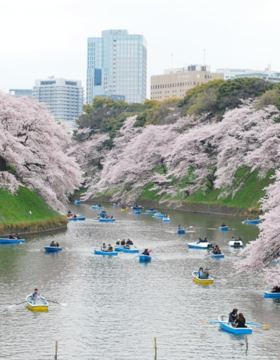 The Best Place to See Cherry Blossoms in Tokyo