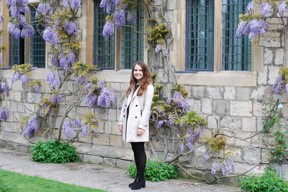 York wisteria at Treasurer's House
