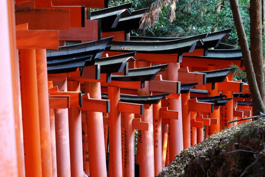 kyoto_fushimi inari taisha kyoto torii