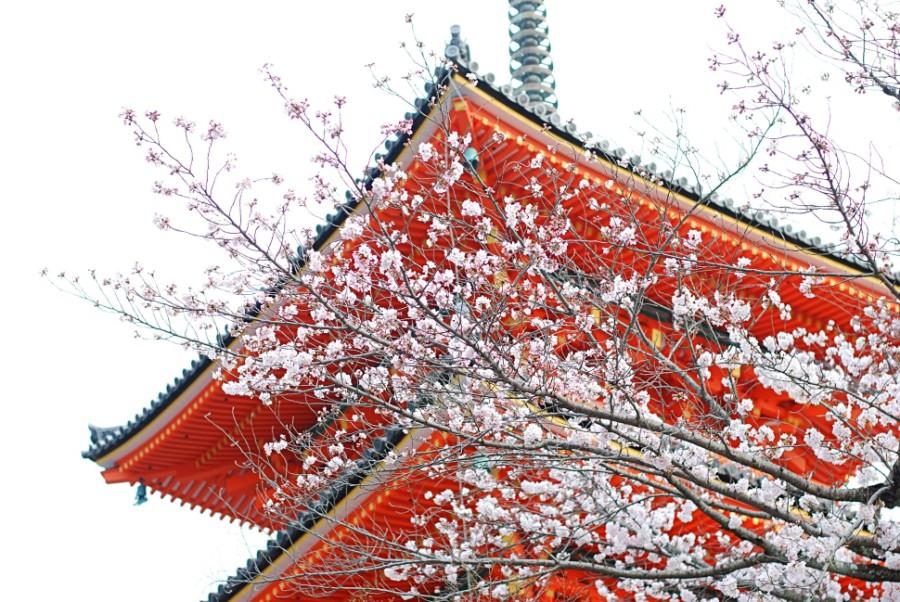 kyoto kiyomizudera blossoms