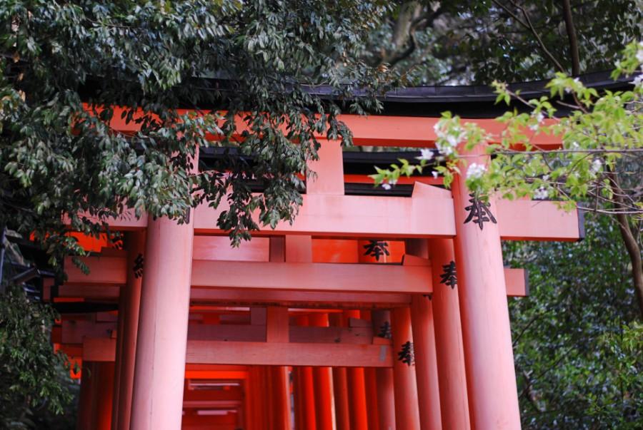 red torii gates japan