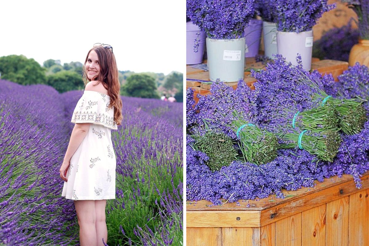 Lavender Fields in London