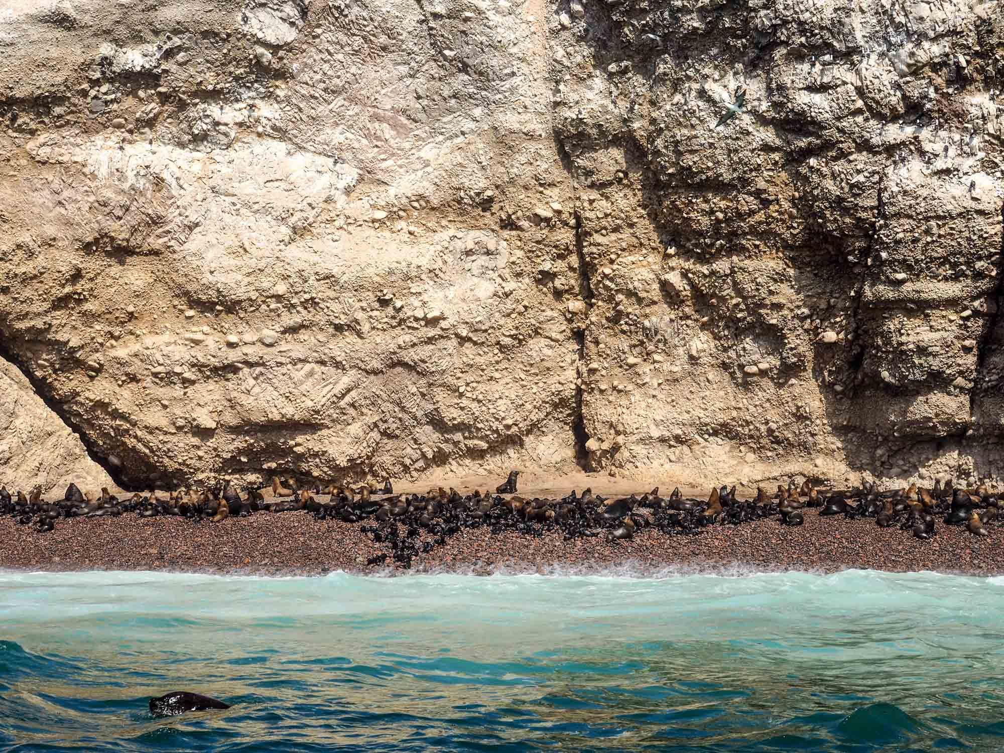 sea lions in islas ballestas