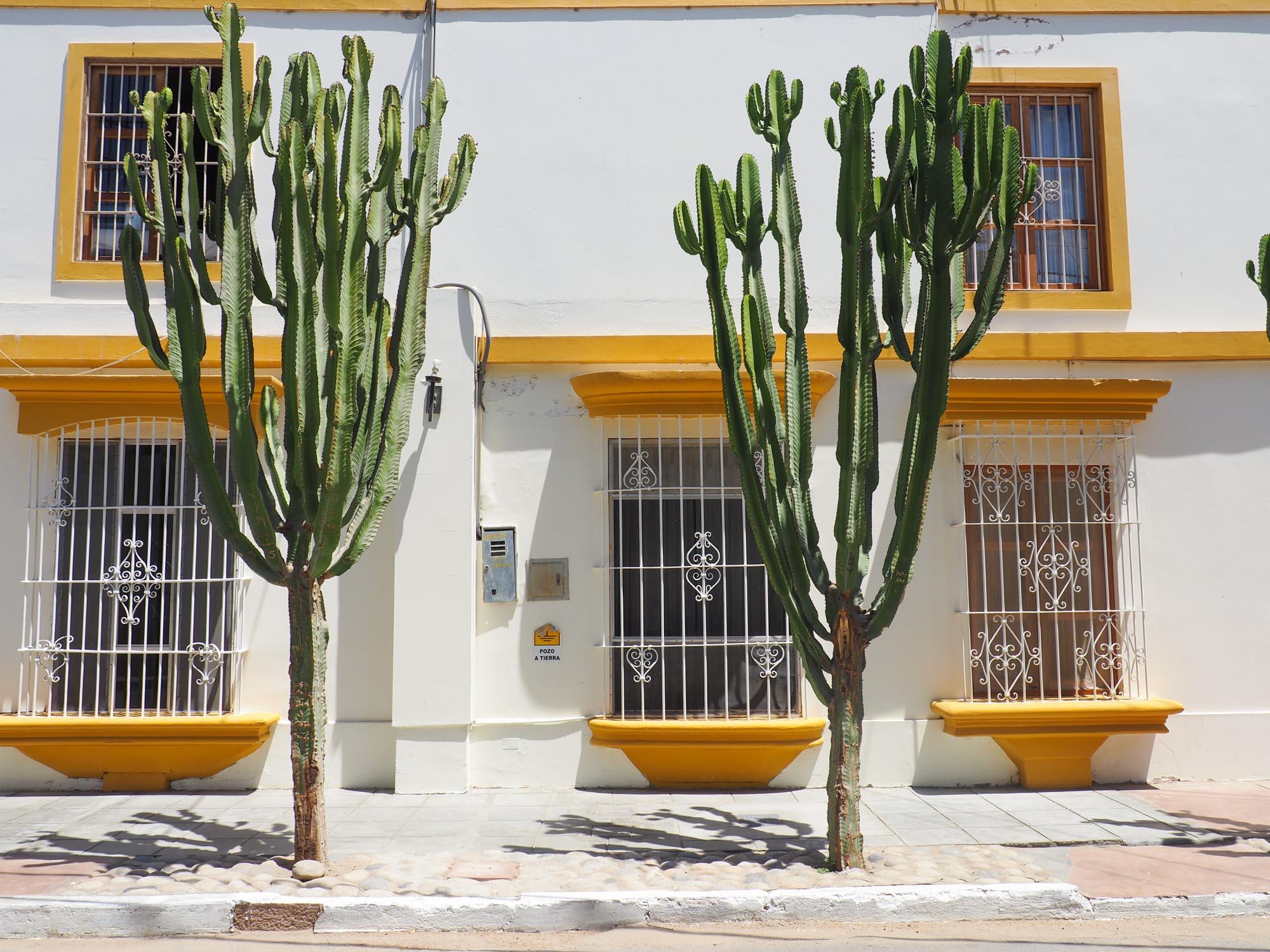 huacachina peru cacti