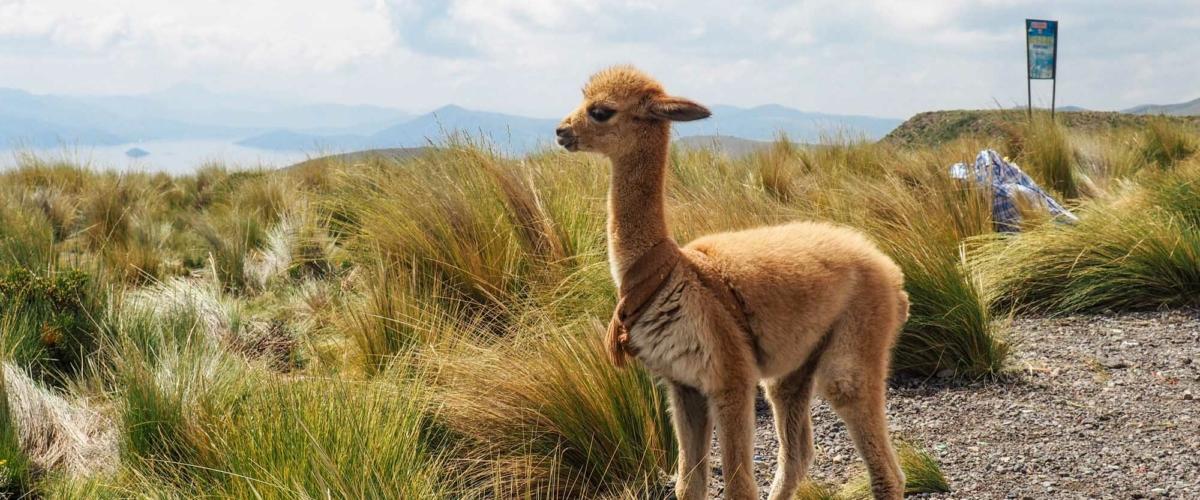 My Detailed 2 Week Peru Itinerary