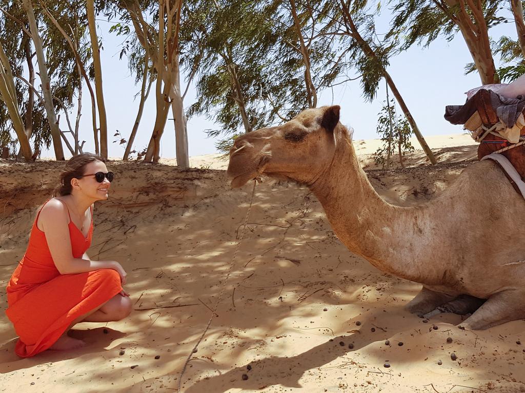 Senegal camel