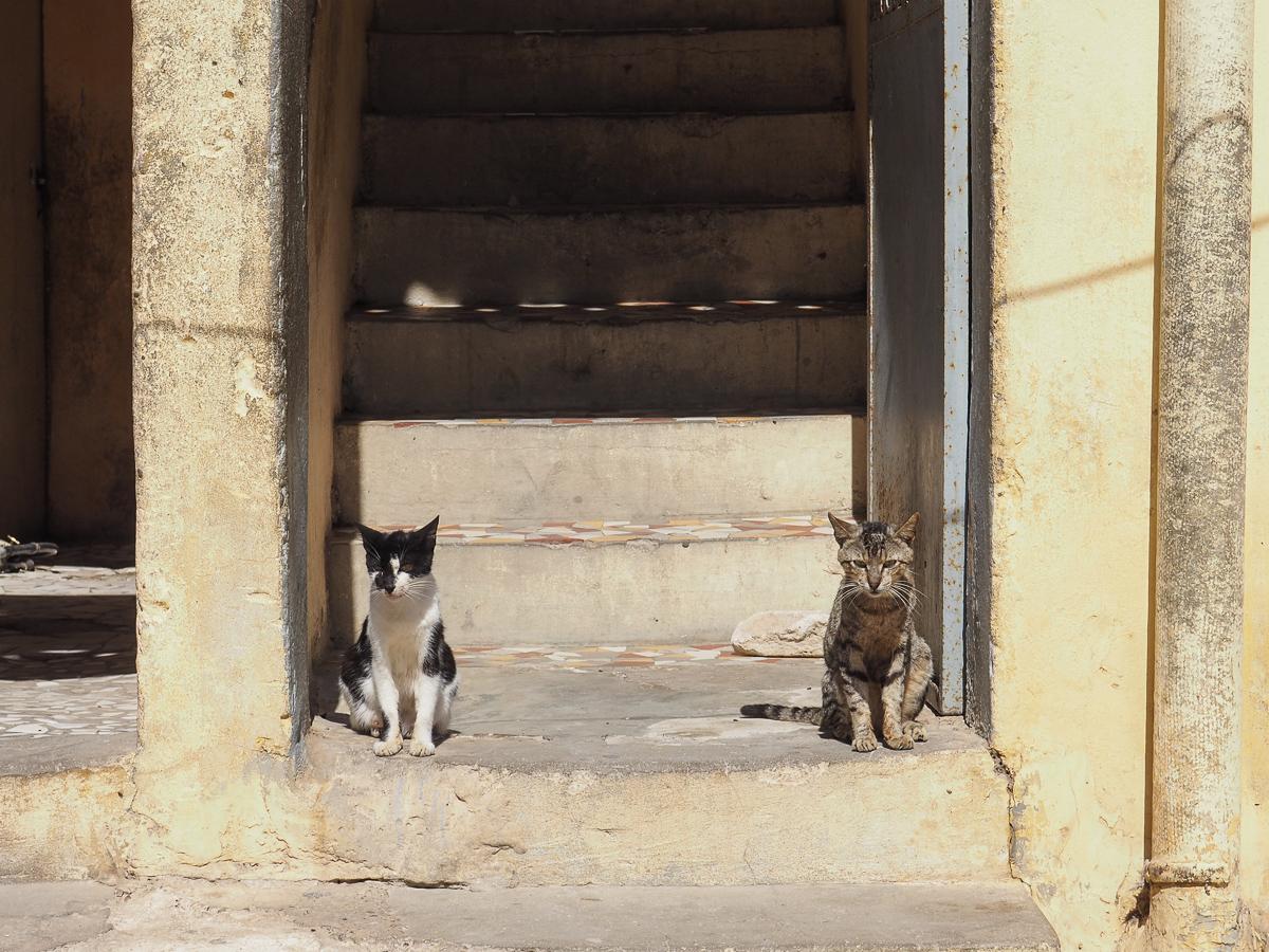 Cats in Senegal