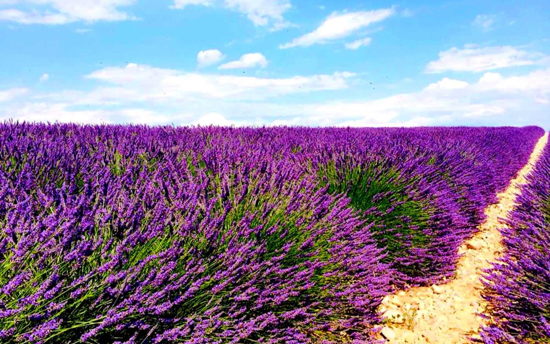 Lavender In Provence Photography Retreat July 5-9 2017