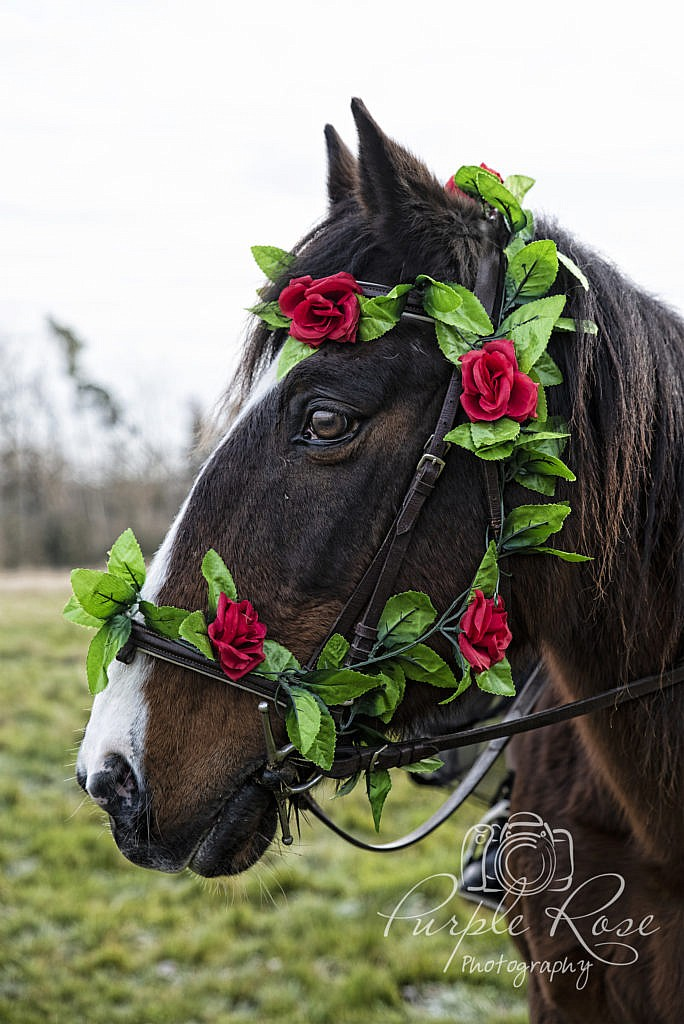 Horse with roses