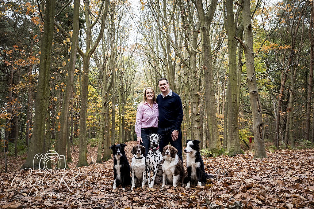 Pre wedding shoot in a forest with their dogs
