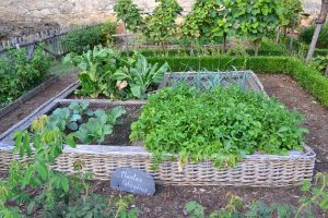 vegetable garden - lots of green leaves and a sign saying plants