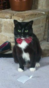 Black and white cat witth a red bow tie