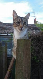 kitten on top of a fence post its a tabby