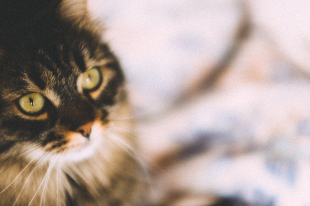 Tabby cat sat on pavement