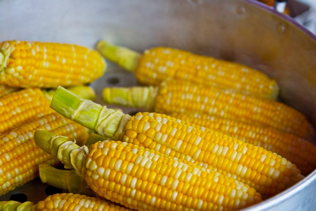 a bowl with several corn on the cobs waiting to be cooked