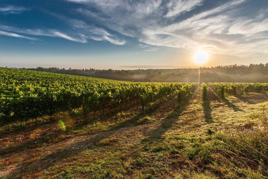 a sun set over a tuscan vineyard