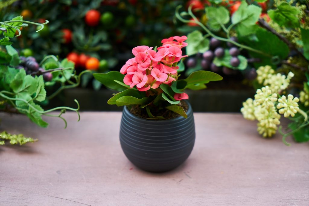 a wooden bench with green foliage behind it and on the bench is a dark blue pot with a pink flower planted in it
