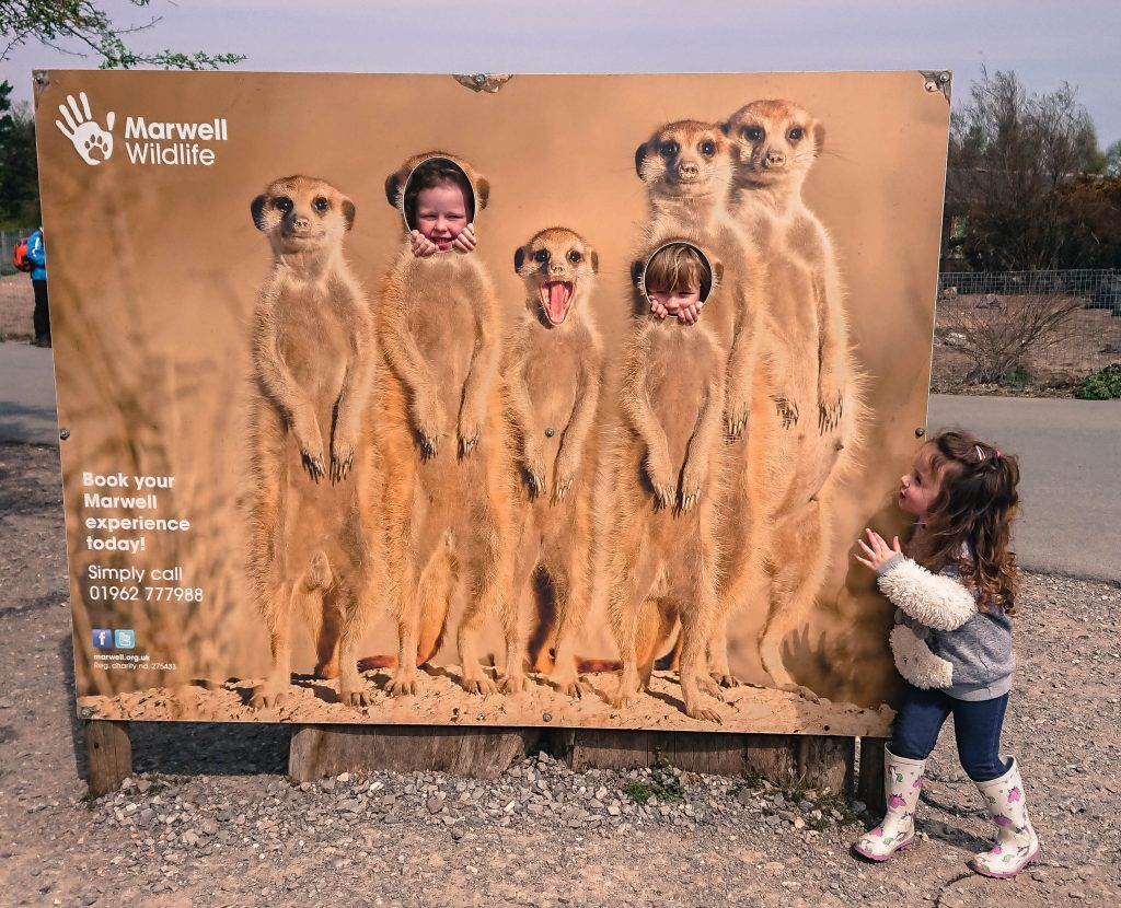 Alyssa stood looking at her friends poking their faces through a meerkat cut out