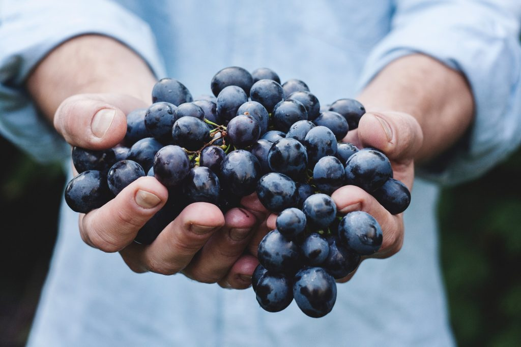 hands holding a bunch of black grapes