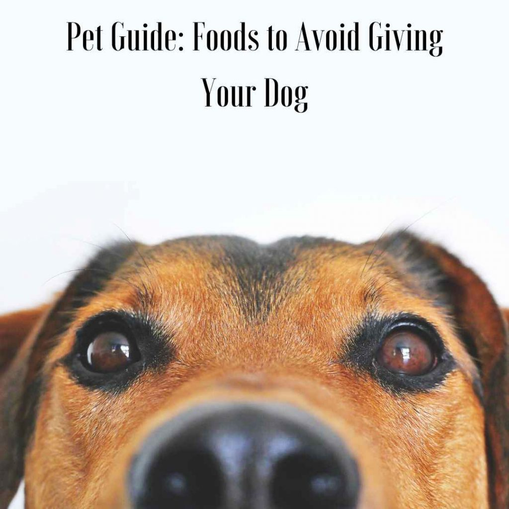 pet guide