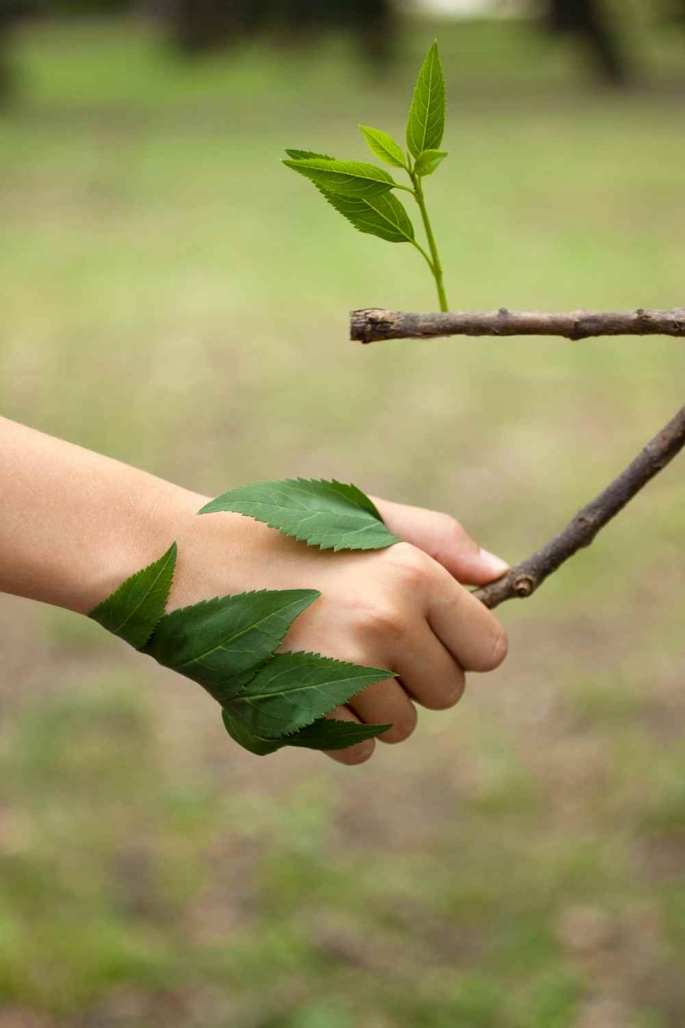 a hand holding a tree branch