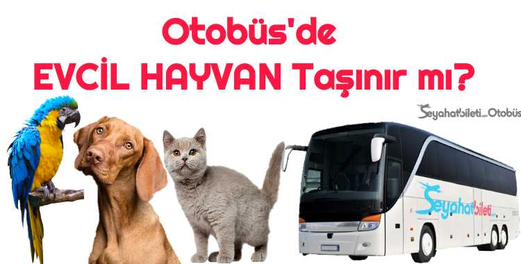 Otobüs Hayvan Taşıma