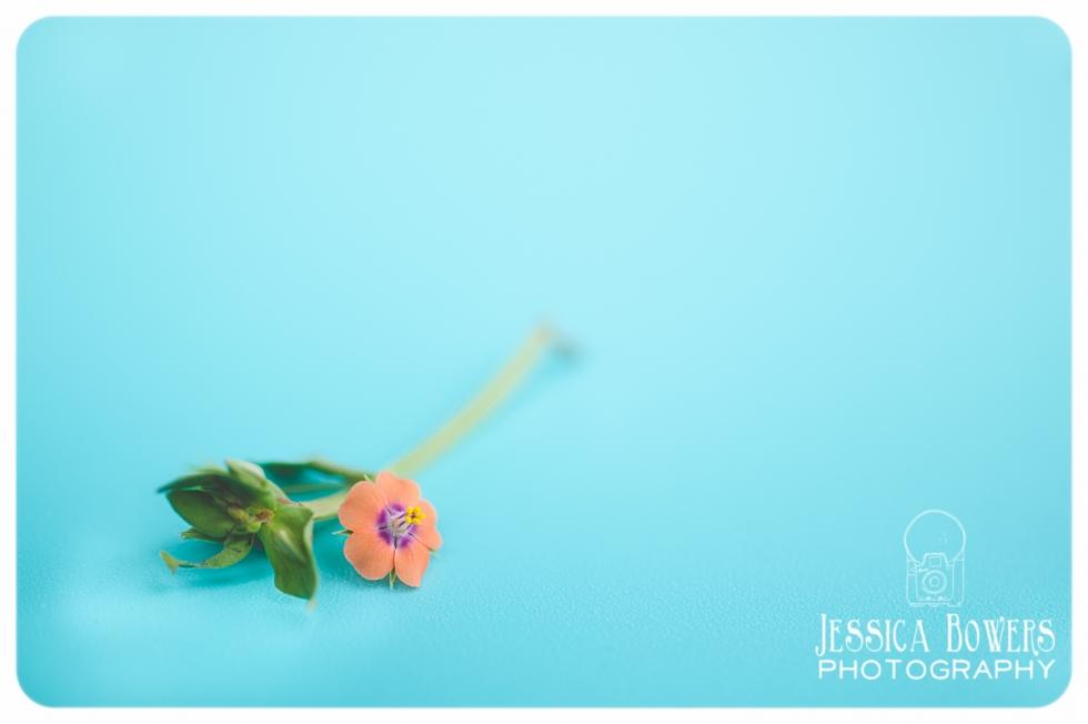 jessicabowersphotography