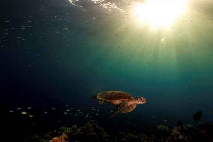 turtle at the great barrier reef