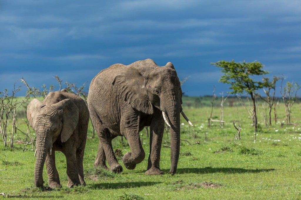 Elephant with her calf