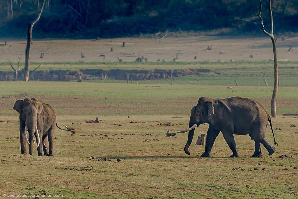 Kabini - Elephantscape
