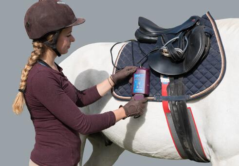 pliance : Pressure between saddle and horse   novel.de