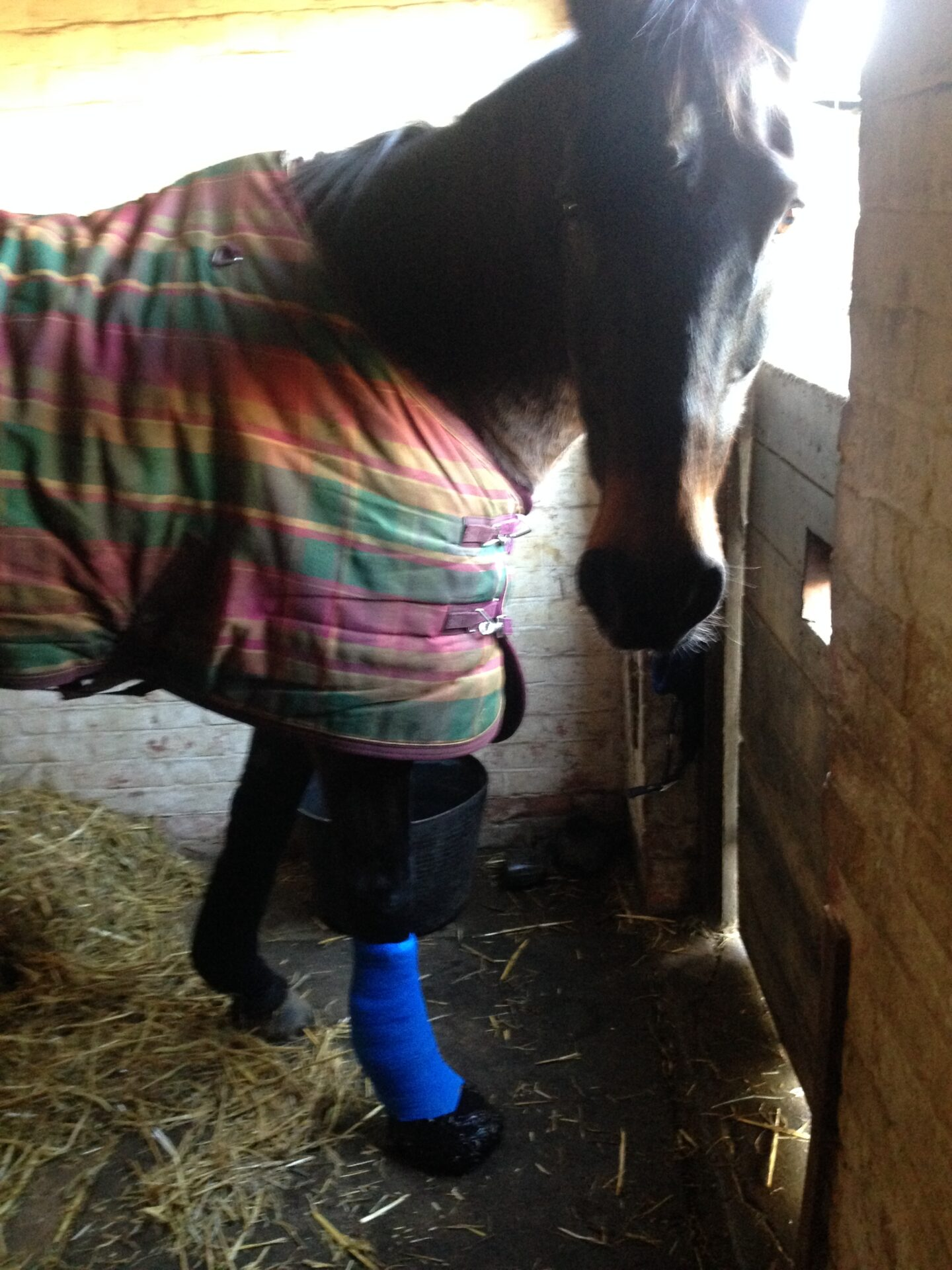 Poorly horse