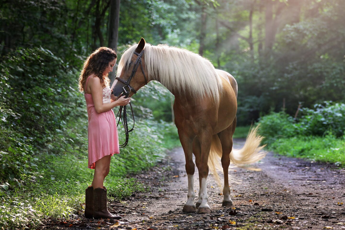 Caring for your first horse
