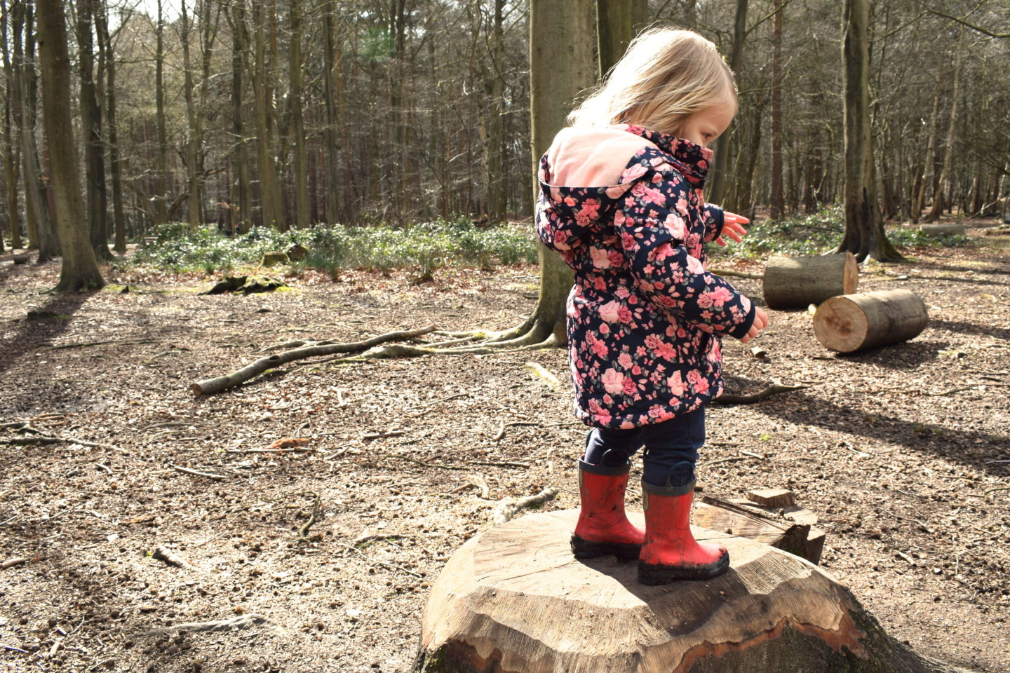The Gruffalo Trail, Essex, girl standing on tree stump