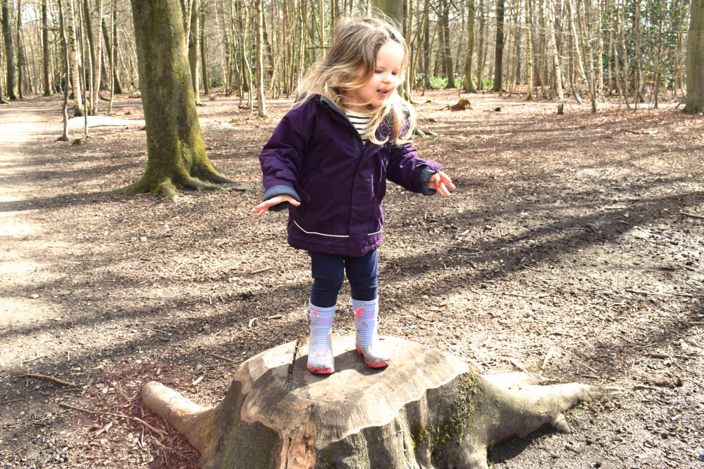 The Gruffalo Trail, Essex, girl playing on tree stump