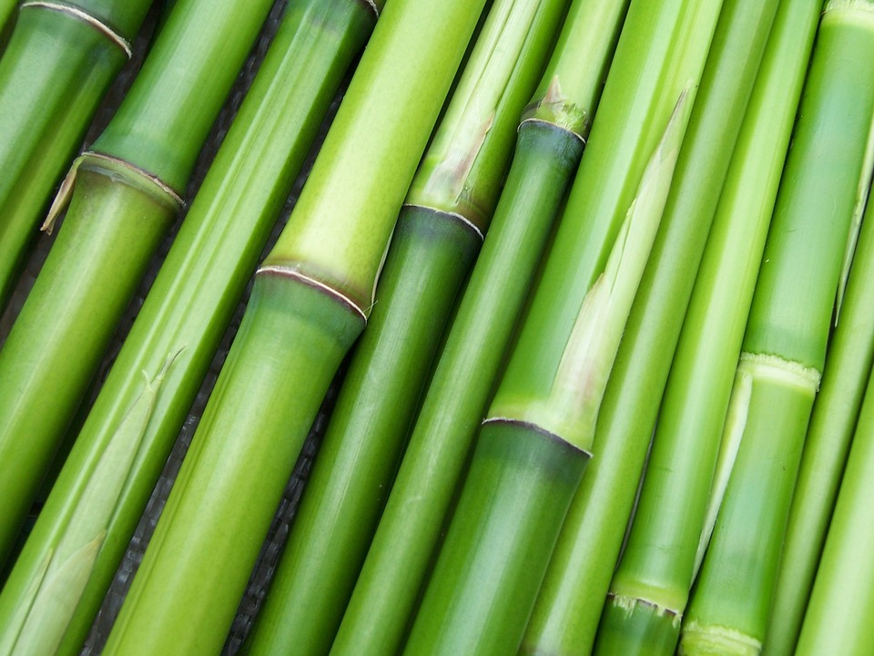 Bamboo, Poor Man's Timber or a Treasure Trove for Sustainable Construction?