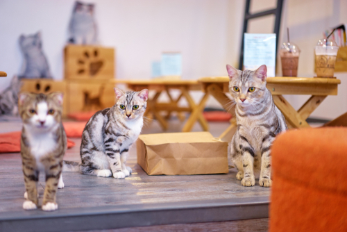 Cats in cafe
