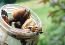 Slug jar