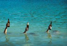 Underwater beer