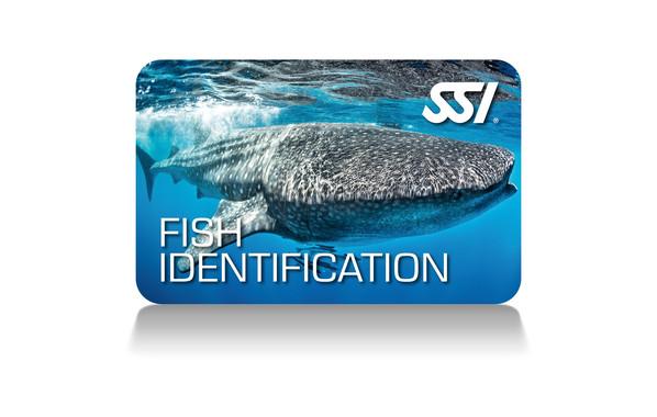 fish identification program