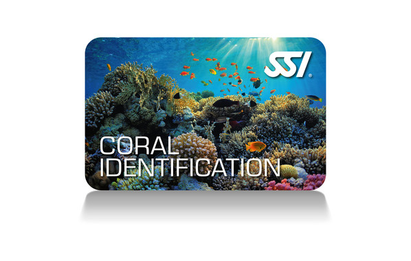 coral identification