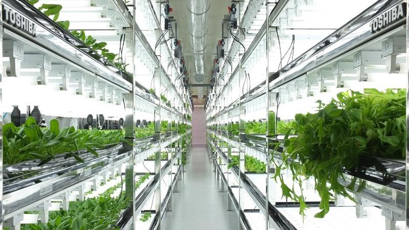 toshiba farm