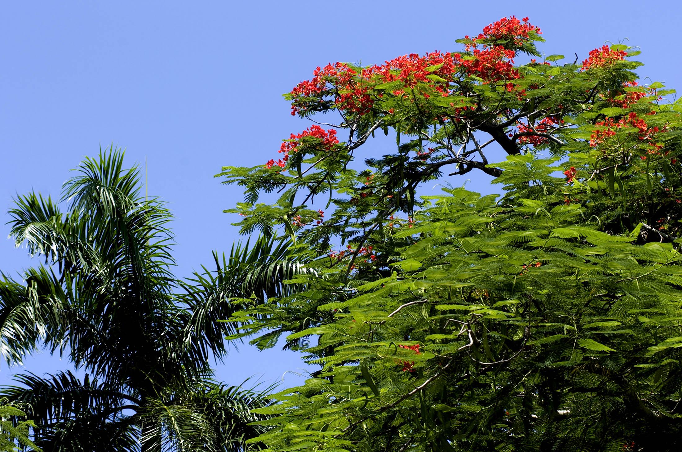 Goldeneye - Jamaica